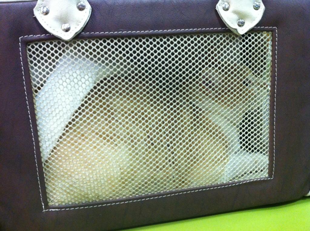 Antes de decolar: Lola e o tapete higiênico todo embolado...